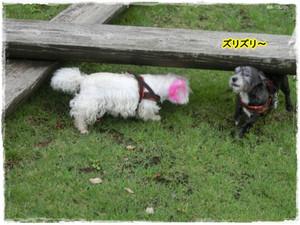 Photo_62