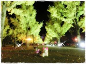 Photo_87