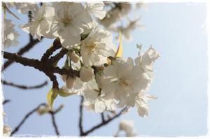 Photo_46
